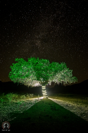 """""""Light Tree"""""""